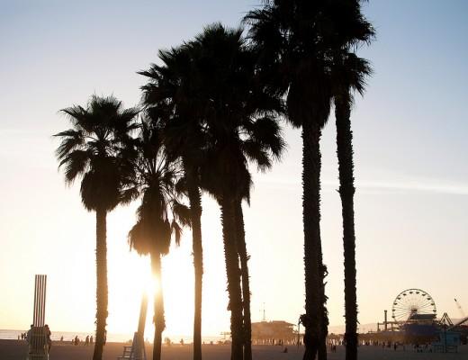 Santa Monica Beach Palms